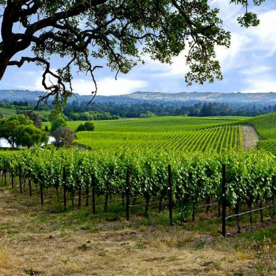 Quality - Producing Wine from Napa Valley